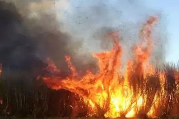 farmers alive in fire in narwai fire scorched death