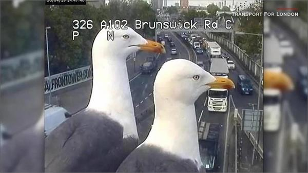 viral video seagull photobombs traffic cam in london