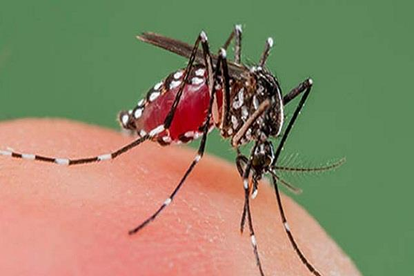 9 cases of dengue emerged in delhi