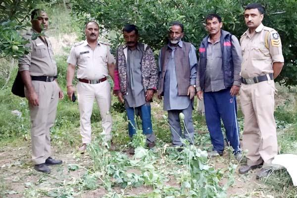 opium crop busted accused arrested
