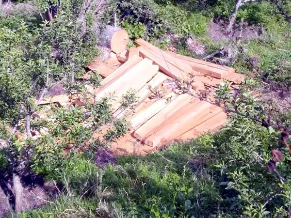 forest mafia in kullu