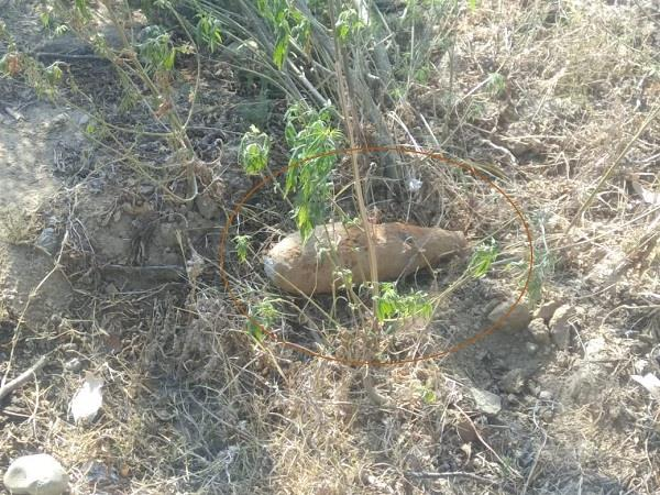 found bomb in pathankot
