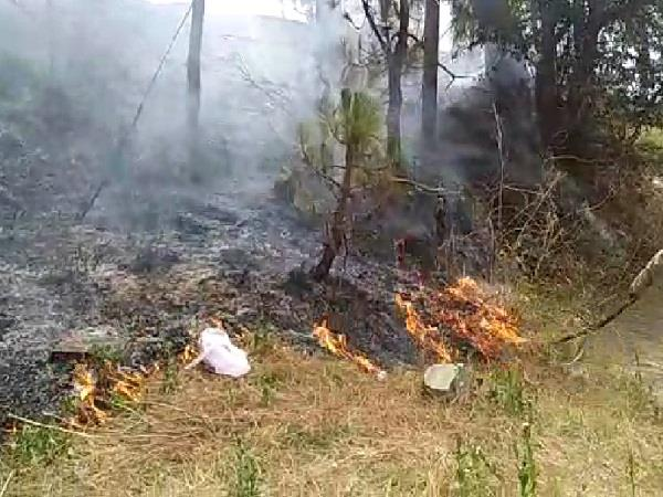 the fierce fire that took place in the forest of junga of shimla