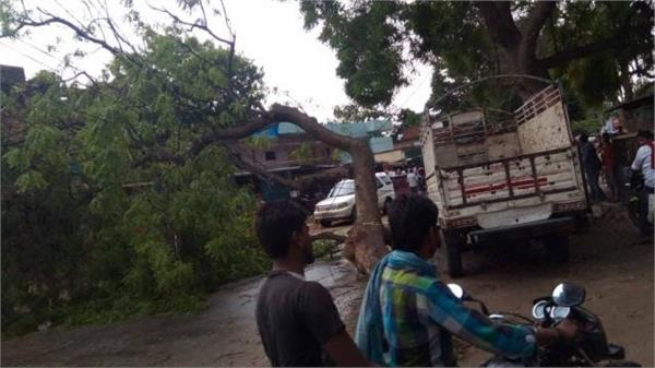 two youths die due to tree collapse in ballia