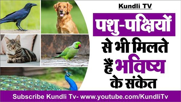 connection of birds and animals with future