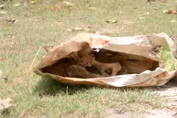 human skeleton found behind skmch
