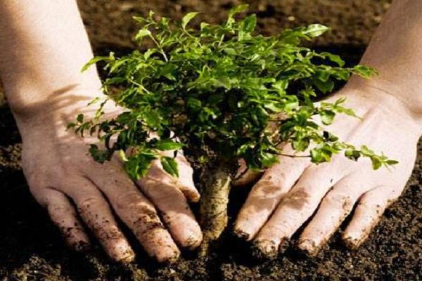 now the plants will have to be taken to get the license of the plant