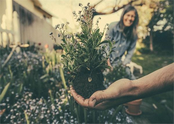 हवा को शुद्ध करने के लिए घर के आस-पास लगाएं ये 10 पौधे