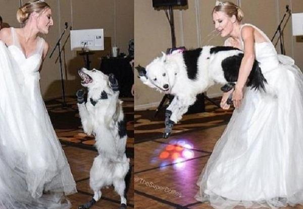 bride dancing with dog on dj floor video viral