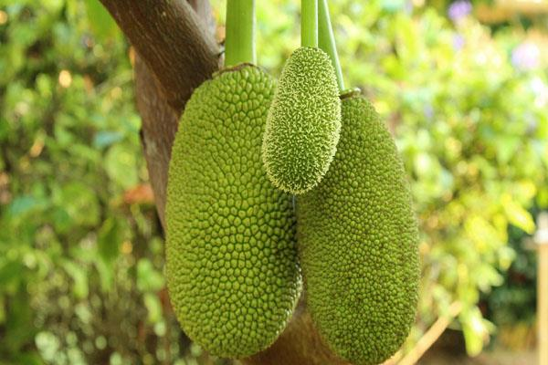 will soon find jackfruit biscuits chocolates and juices