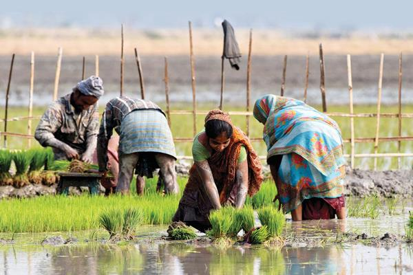 farmers want fair price of crop from modi government