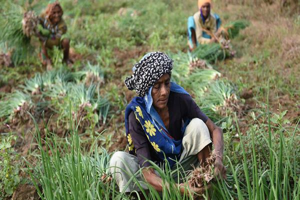farmers to the government of gujarat all farmers now under the pm kisan scheme