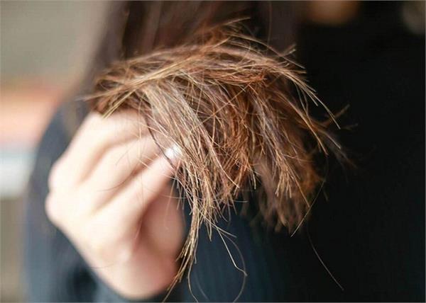 दो-मुंहें बालों की छुट्टी करेंगी किचन की 4 चीजें, नहीं पड़ेगी Hair Cut की जरुरत