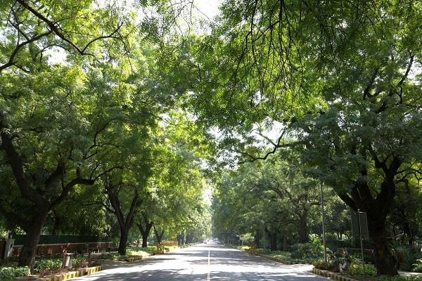 26 kilometers of smart road to fall on 265 trees