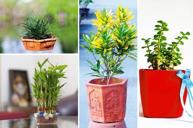 PunjabKesari Promoting Plants in Temples