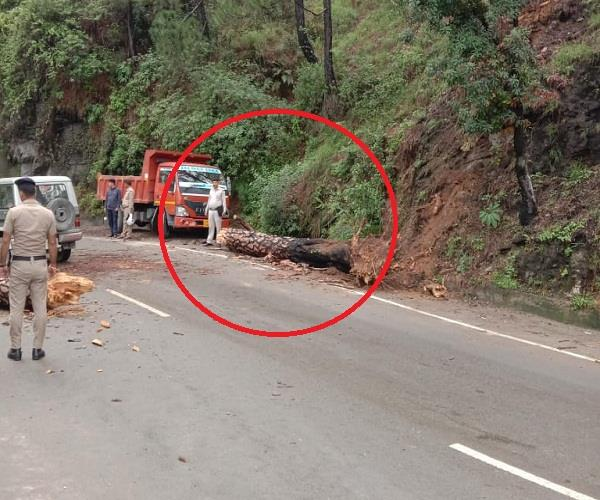 shimla chandigarh dropped tree on nh 5