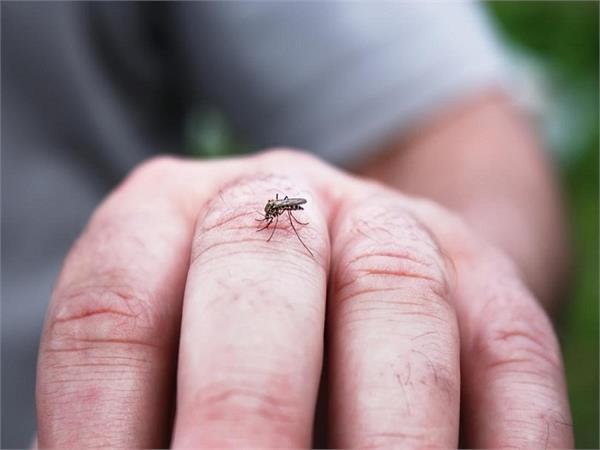 Health Alert: इस मानसून रखें डेंगू-मलेरिया से बचाव, 10 बातों पर दें ध्यान