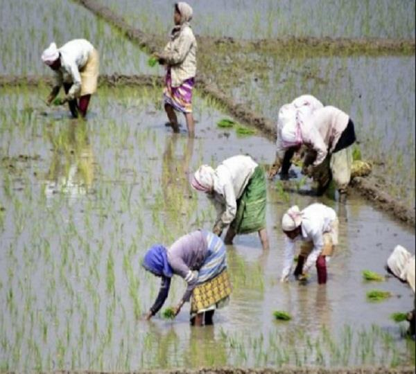 big relief to farmers