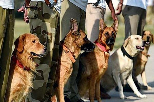 on the transfers of dogs congress show the list