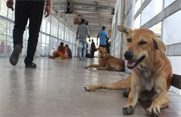 reached catching dogs district municipality team in hospital