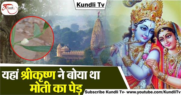 here shri krishna had planted a pearl tree with his own hands