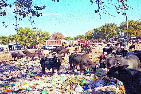 municipal corporation failed to stop polythene