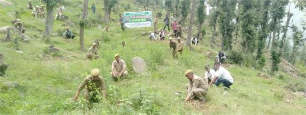green jammu abhiyan by forest dept