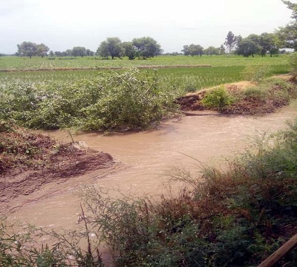 100 acres of crop affected