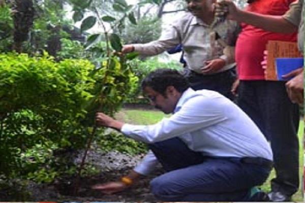 district collector raises plantation on harela festival