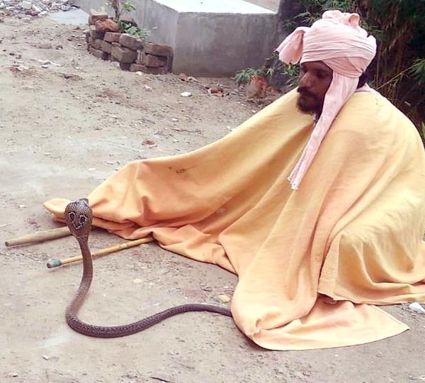 cobra snake found from plot