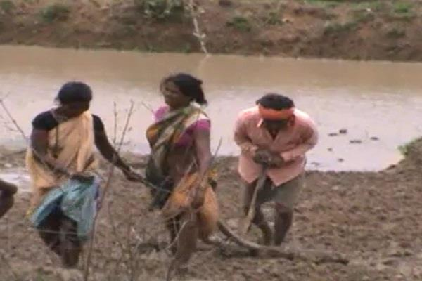 new india s woman power is replacing bulls plowing in the field