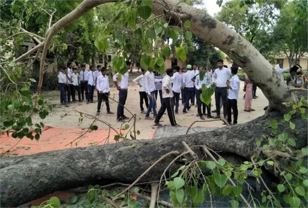 tree collapses in school premises