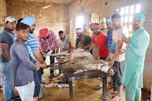 bathinda hindi news
