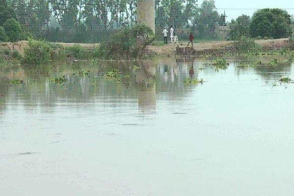 water lelvel increased in ghaggar