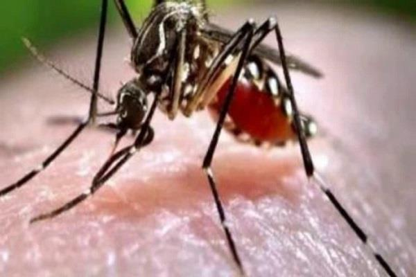 dengue mosquitoes are biting at night also be careful