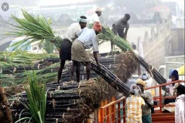 up again becomes number 1 in sugarcane and sugar production