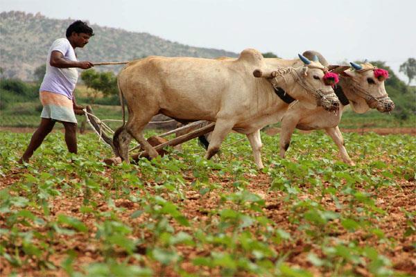 agro technology start up segment gets 248 million in first half nasscom