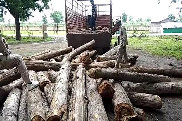 action taken by forest department
