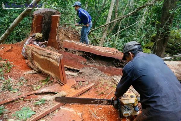 india emphasis on lifting ban on rosewood products