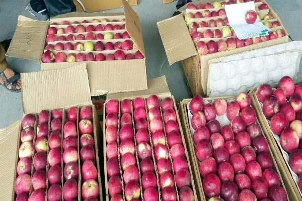 government took steps to improve the economic condition of apple orchards