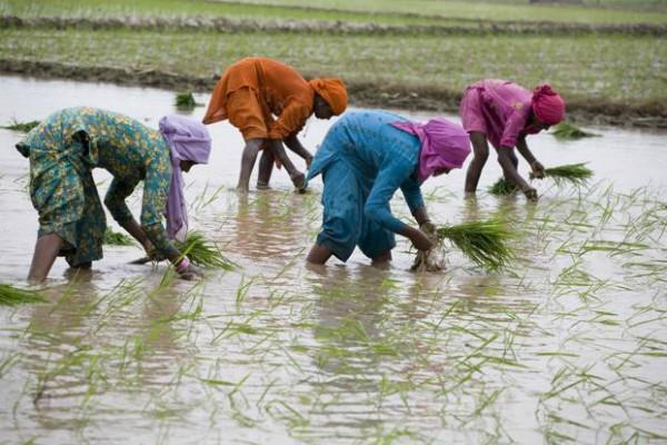 sowing of kharif crops increases despite low rainfall