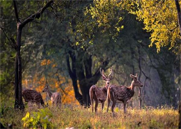 हिल स्टेशन नहीं, इस बार करें इन 4 जंगल की सफारी, एडवेंचर्स के लिए बेस्ट