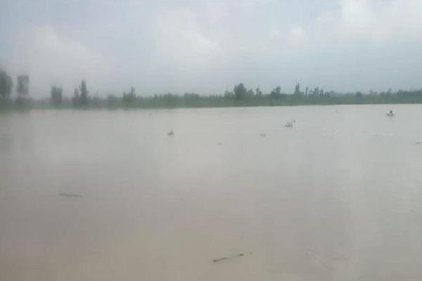 water level rises in sutlej river after release of water in bhakra