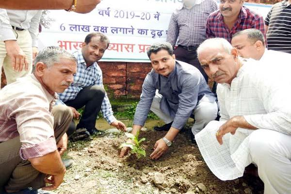 plantation program in sundernagar