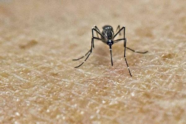 24 cases of dengue larva in jalandhar