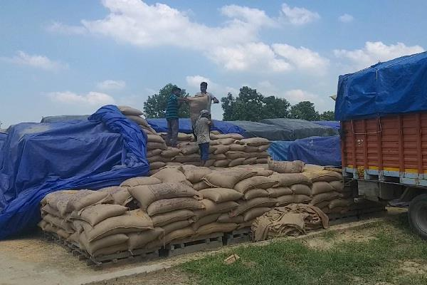 80000 bags of wheat tainted due to negligence
