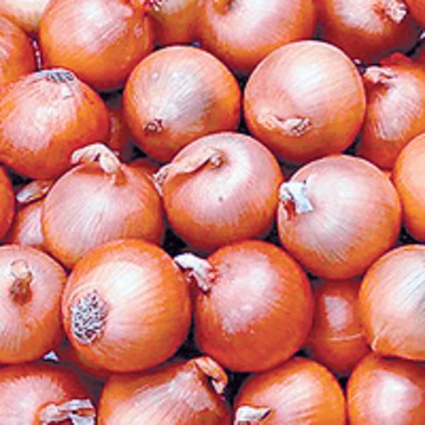afghan onion reached attic