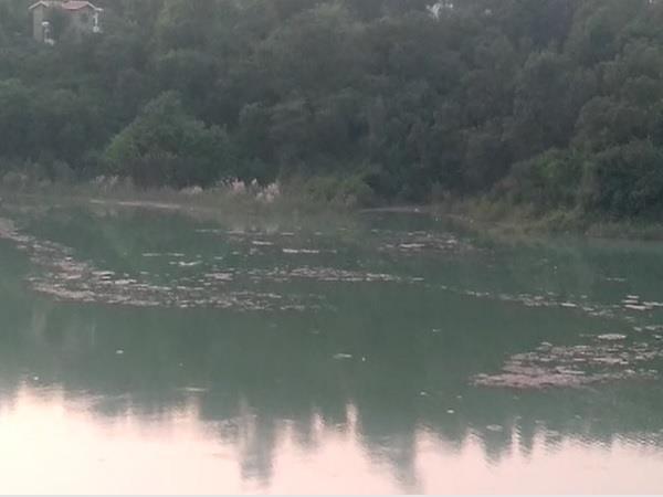 gobind sagar lake filled with dirt bhakra beas management board sitting blind