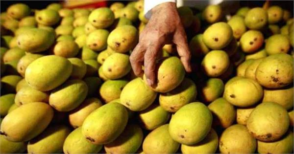 dubai to deport indian worker for stealing two mangoes