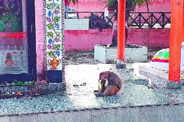 public upset due to fear of monkeys